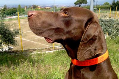 Home Incido Collari Personalizzati Per Cani Fluorescenti Con